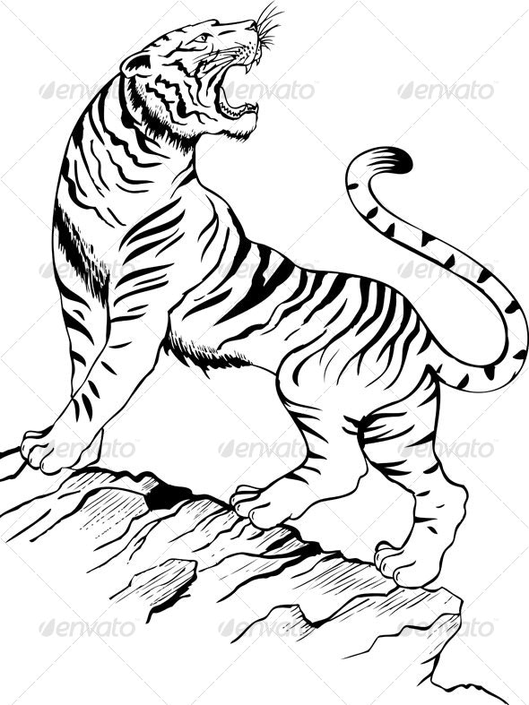 Tiger - Animals Characters