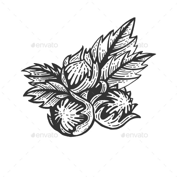 Hazelnut Nut Sketch Engraving Vector - Food Objects
