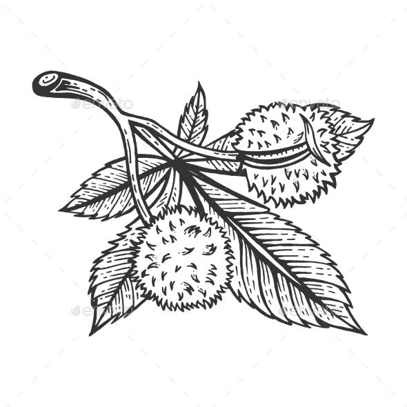 Chestnut Tree Branch Sketch Engraving Vector - Miscellaneous Vectors