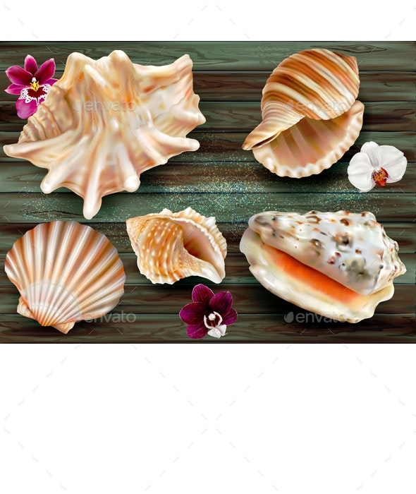 Shell Background - Seasons Nature