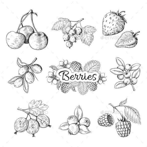 Hand Drawn Berries - Food Objects