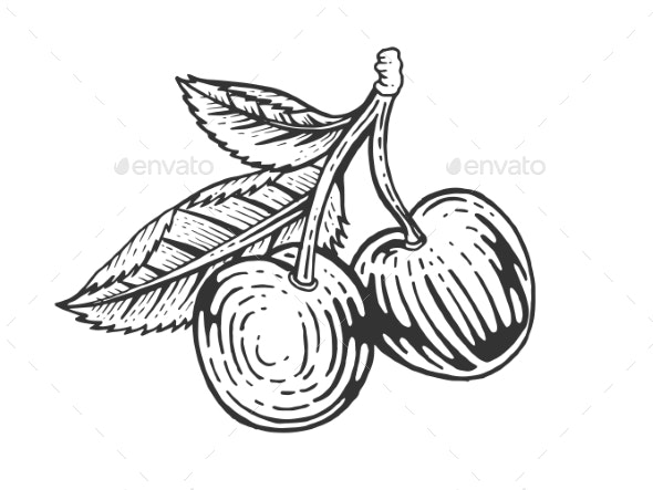 Cherry Berry Fruit Sketch Engraving Vector - Food Objects