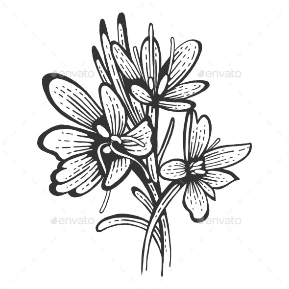 Saffron Flower Spice Sketch Engraving Vector - Food Objects