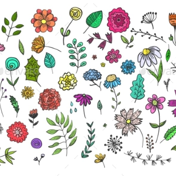 Set of Hand Drawn Colorful Flowers and Herbs