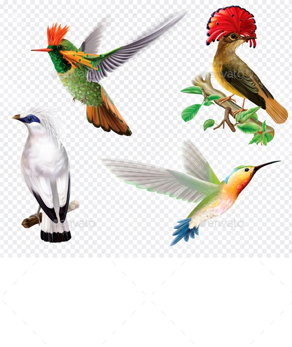Tropical Birds and Hummingbird on a Transparent Background - Animals Characters