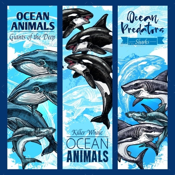 Shark and Whale Sea Predatory Animal Banner Set - Animals Characters