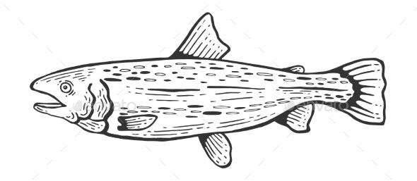 Salmon Fish Sketch Engraving Vector - Miscellaneous Vectors