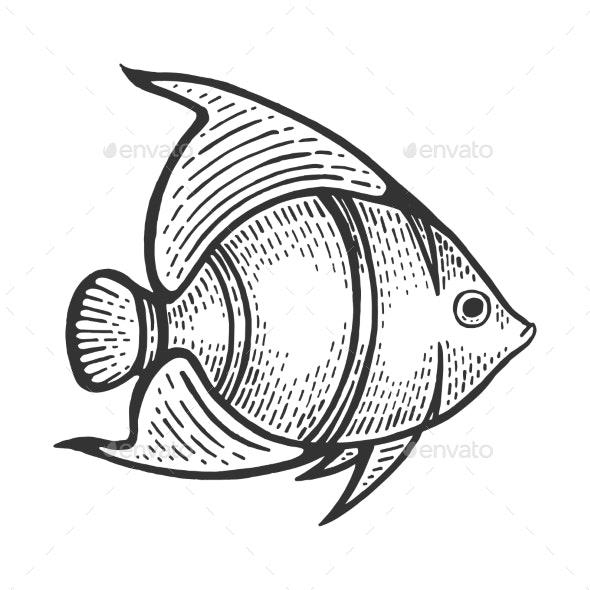 Angel Fish Sketch Engraving Vector - Miscellaneous Vectors