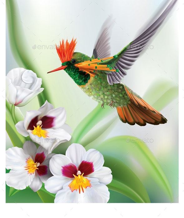 Hummingbird Tufted Coquette Lophornis Ornatus over White Orchids - Animals Characters