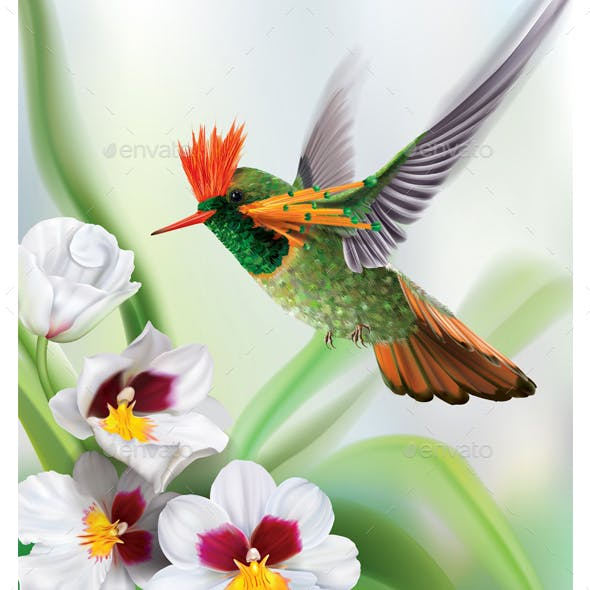 Hummingbird Tufted Coquette Lophornis Ornatus over White Orchids