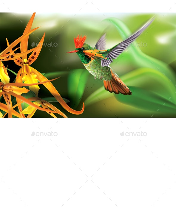 Hummingbird Tufted Coquette Lophornis Ornatus over Yellow Orchids - Animals Characters
