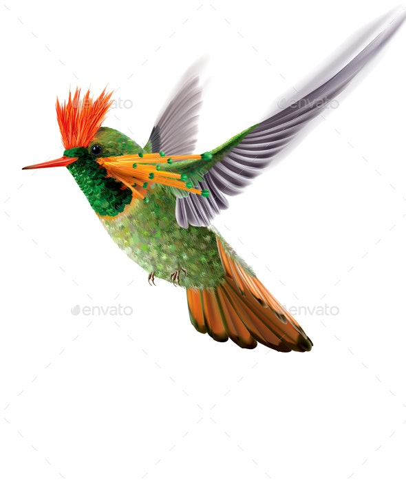 Brightly Colored Hummingbird Tufted Coquette Lophornis Ornatus - Animals Characters