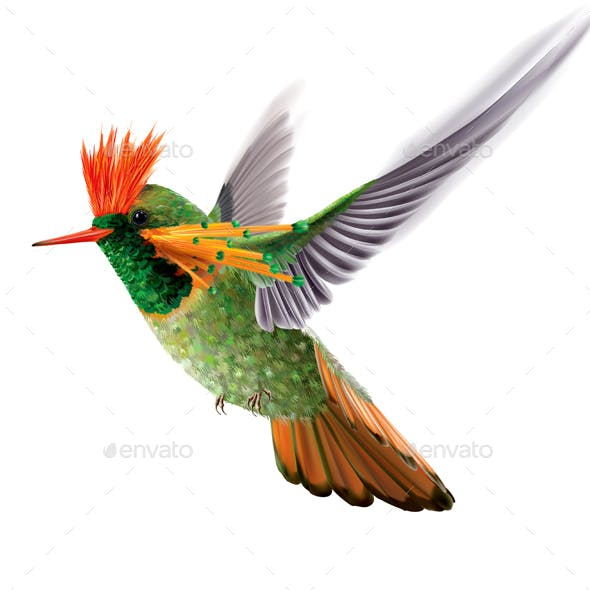 Brightly Colored Hummingbird Tufted Coquette Lophornis Ornatus
