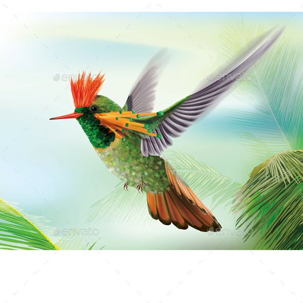 Hummingbird Tufted Coquette Lophornis Ornatus Over Palm Leaves