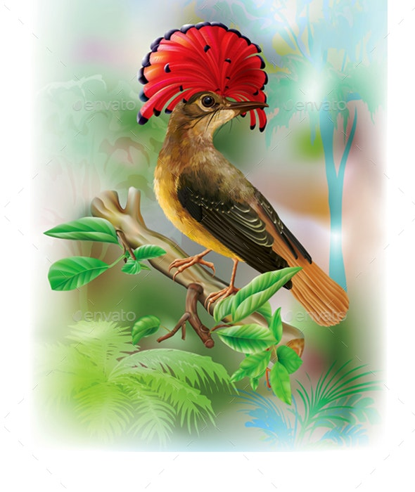 Amazonian Royal Flycatcher on a Tropical Background - Animals Characters