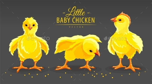 Hen Chicken - Animals Characters