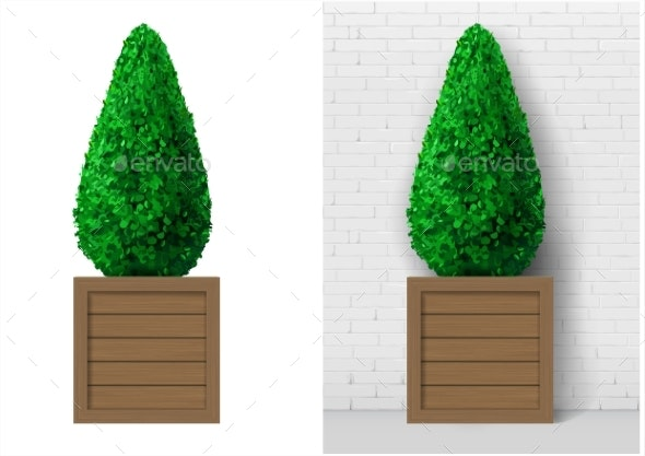 Bush Plant in Modern Wooden Pot - Flowers & Plants Nature