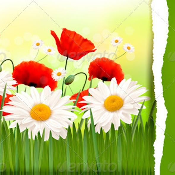 Spring Background with Red Poppies and Daisies.