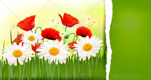 Spring Background with Red Poppies and Daisies. - Flowers & Plants Nature