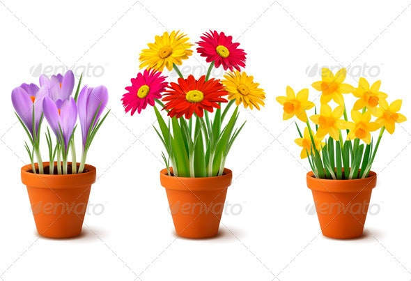 Spring and Summer Colorful Flowers in Vases  - Flowers & Plants Nature