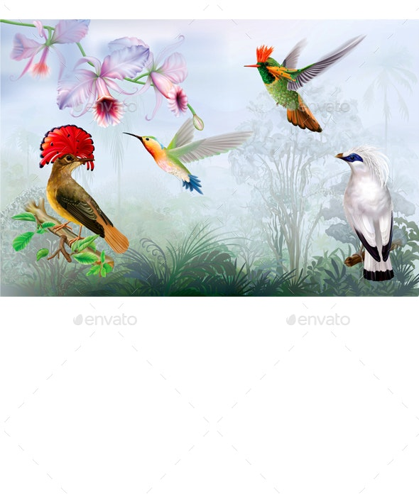 Tropical Bright Birds and Hummingbird on a Rainforest Background - Animals Characters
