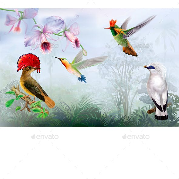 Tropical Bright Birds and Hummingbird on a Rainforest Background