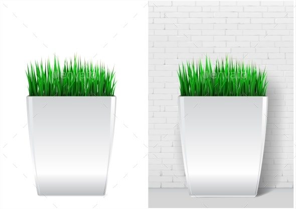Grass Plant in Modern White Pot - Flowers & Plants Nature