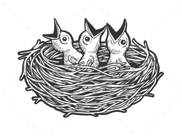 Nestling Bird in Nest Sketch Engraving Vector - Animals Characters