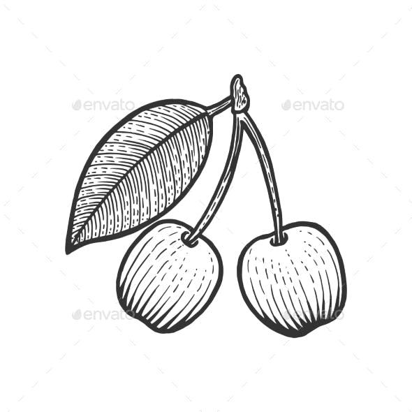 Cherry Berry Fruit Sketch Engraving Vector