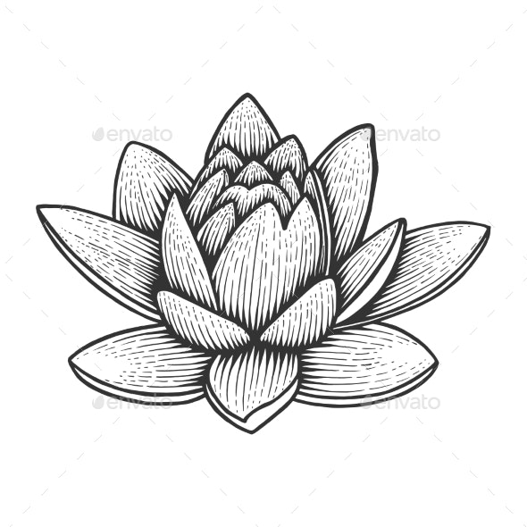 Nymphaea Water Lily Flower Sketch Engraving Vector - Flowers & Plants Nature