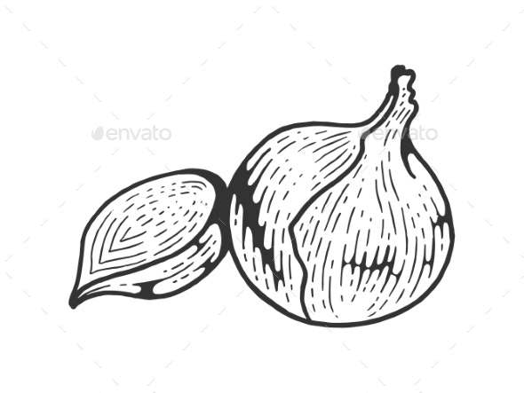 Onion Vegetable Sketch Engraving Vector - Food Objects