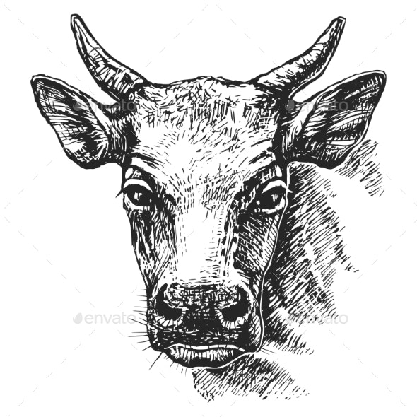 Cow Head Sketch - Animals Characters