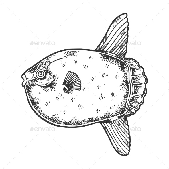 Ocean Sunfish Sketch Engraving Vector - Miscellaneous Vectors