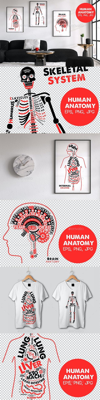 Human Anatomy Posters - Health/Medicine Conceptual