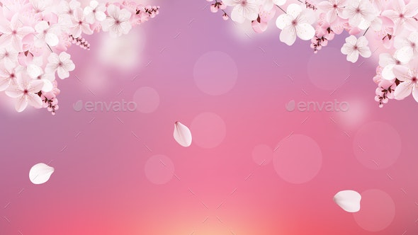 Blossoming Pink Sakura Flowers - Flowers & Plants Nature