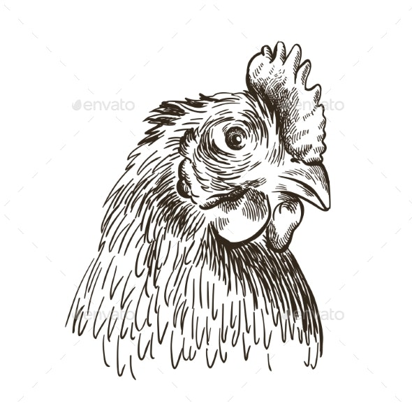 Head of a Chicken - Animals Characters