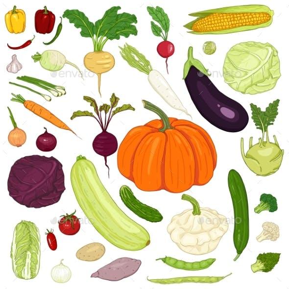Vector Set of Cartoon Vegetables