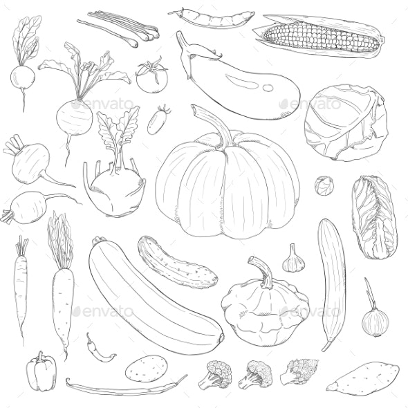 Vector Set of Sketch Vegetables - Food Objects