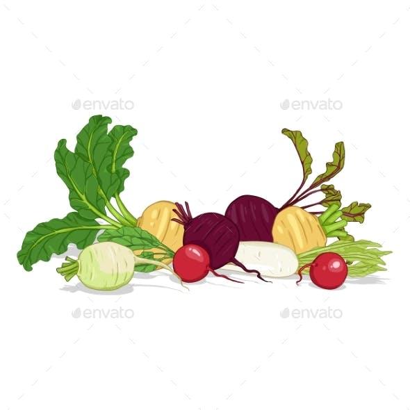 Vector Cartoon Color Set of Root Vegetables