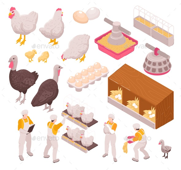 Chicken Production Icon Set - Animals Characters