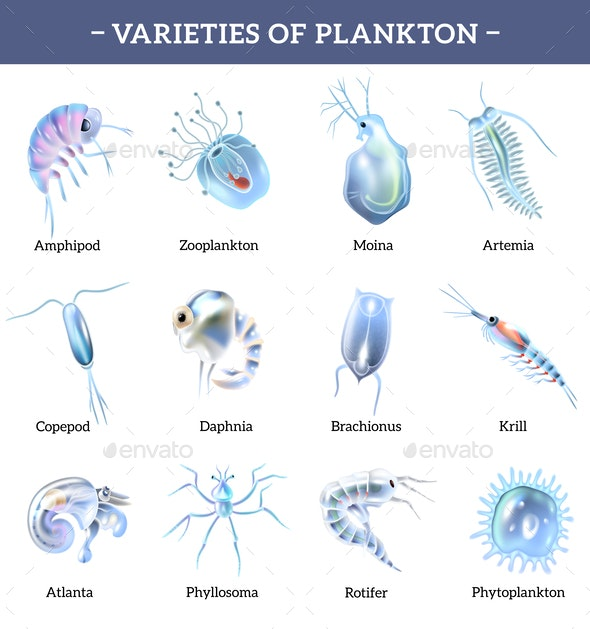 Plankton Icons With Text Explanation - Animals Characters
