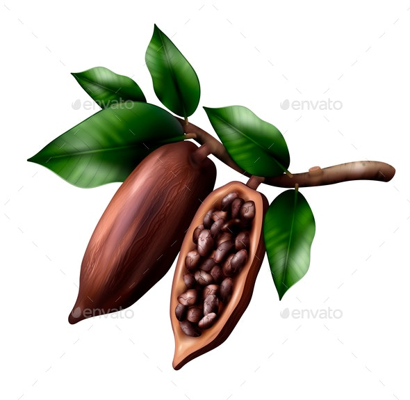 Realistic Cocoa Tree Composition - Food Objects
