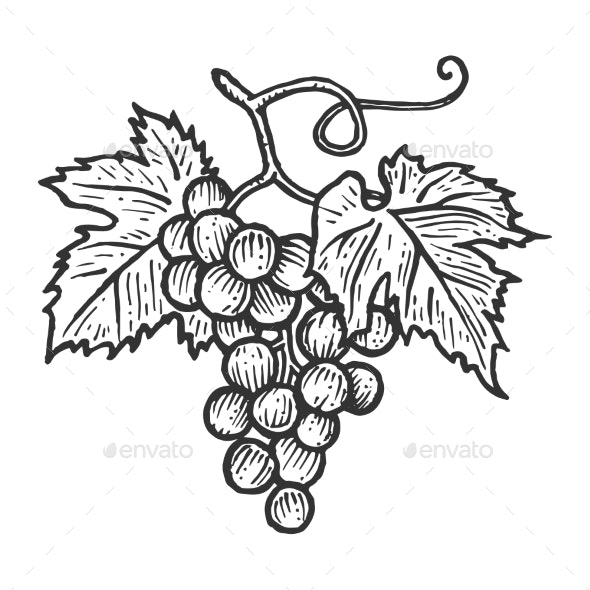 Grapes with Leaves Sketch Engraving Vector - Food Objects