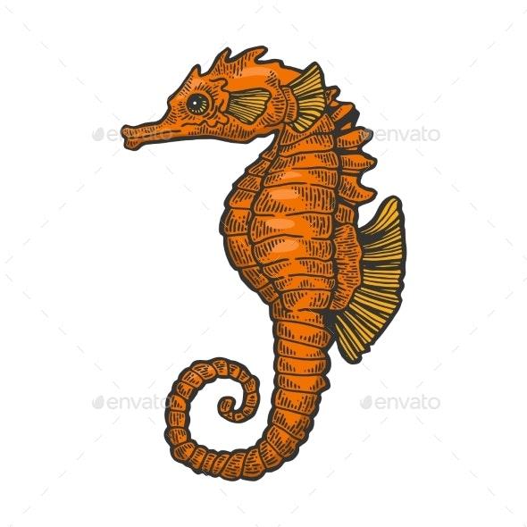 Sea Horse Fish Color Sketch Engraving Vector - Animals Characters