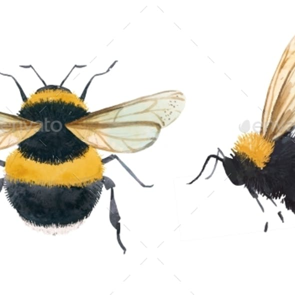 Watercolor Bumblebee Illustrations