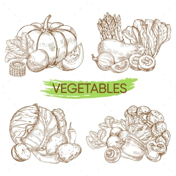 Hand Sketched Vector Vegetables Isolated on White - Food Objects