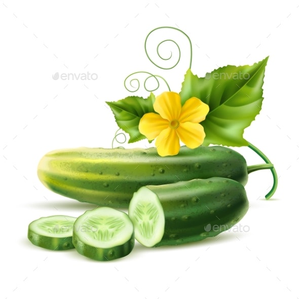 Vector Realistic Cucumber Green Leaf Flower - Food Objects