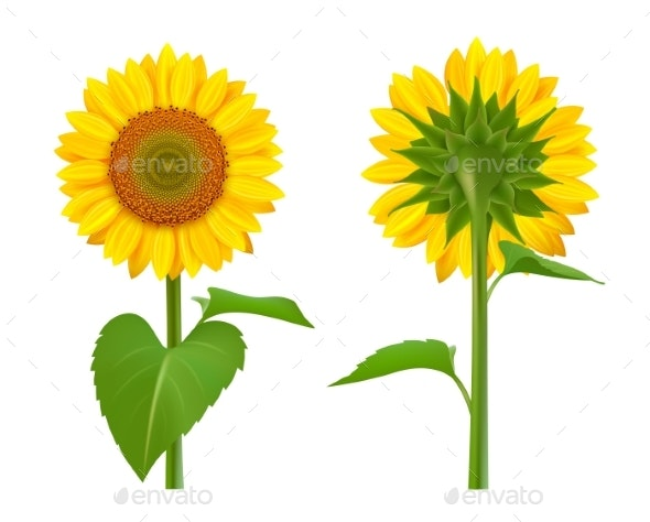 Sunflowers Realistic - Organic Objects Objects