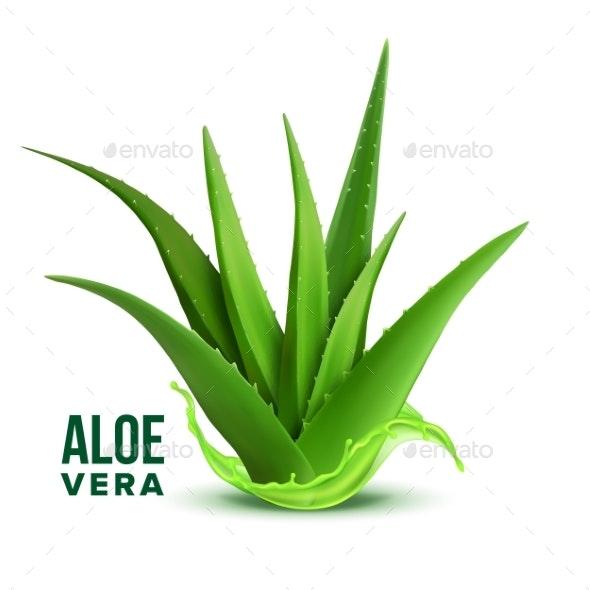 Natural Medicine Foliage Plant Aloe Vera Vector - Flowers & Plants Nature
