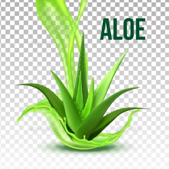 Realistic Foliage Green Plant Aloe Vera Vector - Flowers & Plants Nature